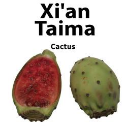 Cactus Xian Taima